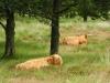 2012_niederlande-209_2